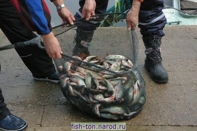 рыбалка в эстонии разрешение