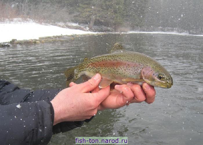 гомель рыбалка на володькином озере видео