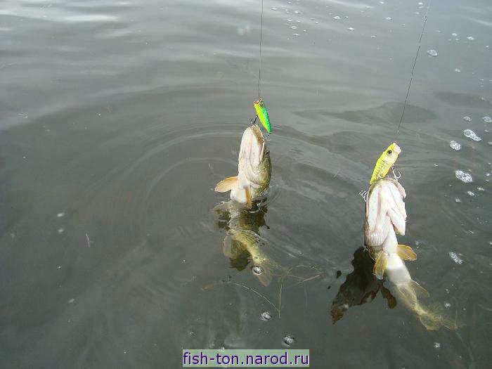 рыбалка в черноерковской 2017
