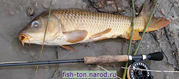 ловить рыбу на можайке