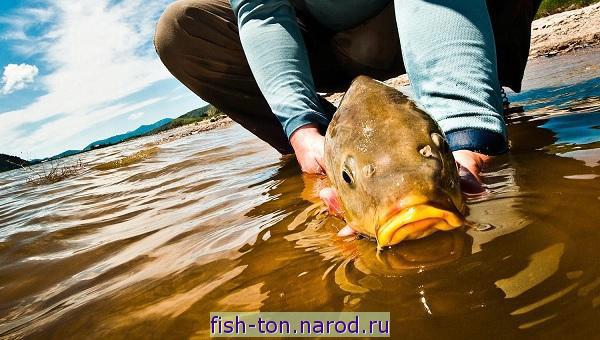 где клюёт рыба в ярославской области сегодня